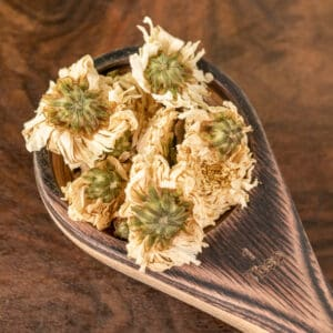 chrysanthemum flower botanical tea