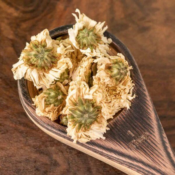 chrysanthemum flower botanical tea